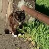 17歳の猫のナナちゃん