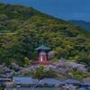 薬王寺の桜 2021.4.3
