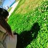 四つ葉のクローバーを探す牧野真莉愛