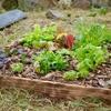 新築のお庭を畑に!箱庭づくりレポート
