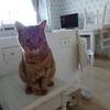 「なぜ、ネコはニャーと鳴く」~チコちゃんに叱られる