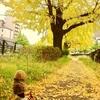 ゲンゴロウの秋冬コレクション