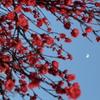 862  春の月
