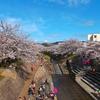 全長5kmにも続く1000本の桜並木を堪能!「佐保川桜まつり燈火会」(奈良市)