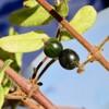 「佐久の季節便り」、木の実の色づく、「岩村田城址」…。
