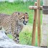 【レポ#7】夏休み明けの千葉市動物公園現地レポート(2020/09/05)【動物園】