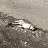 結局犬を連れて海に行ってしまいました。親バカッ!