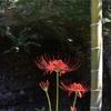 萩に彼岸花、そして美しい庭園。鎌倉「海蔵寺」を秋さんぽ