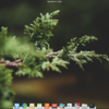 elementary OS 0.4.1 Loki をインストール