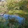 トンボの池(和歌山県和歌山)