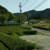 新緑が眩しい!! 郊外へ。