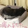 甲斐犬サン、疲れは寝て取る!の巻〜(( _ _ ))..zzzZZ。