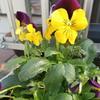 ご近所の園芸に習う
