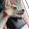 飼い犬に「財布を握られてる」ことも幸せだなと思います。この幸せが続きますように