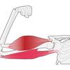 筋肉と骨は腱でつながっている