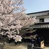 倉敷美観地区周辺の桜と大原本邸