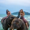 南国ビーチで象さんと遊ぼう!