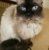 うちのMIX猫、ミルクちゃんのはなし。