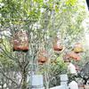 子供と海外旅行〜春は香港・28〜旺角love!バードガーデンはおすすめ