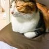 【愛猫日記】毎日アンヌさん#127