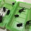 【北海道】道央にクワガタ今期初採集!虫捕り最高ー