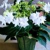 銀座のホステスは『花より団子』です!