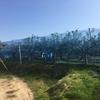 美味しい柿&お酢を求めて!滋賀県野洲市にある「南 農園」さんに行ってきました!-この時期の柿は最高!-