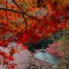大山詣り登山 今年の紅葉の見頃は11月中旬