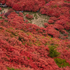 一目百万本、ツツジが満開な奈良県葛城山。色鮮やかなで日焼けもなく美しかった。