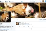 ブログ開設から1年を過ぎ、ようやくTwitterのアカウントを作りました。