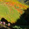 岩手山の紅葉、七滝コースの大地獄谷