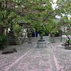 【鎌倉いいね】桜の後は。桜色の絨毯と新緑と。