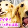 子犬から成犬へ 3ヶ月→ 8ヶ月の成長記録 ダックス
