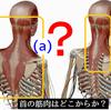 背面の首の筋肉はどこから?