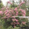 田舎ぐらし、この1週間、青海島の花