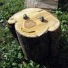 ローラの木