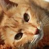 ペットの死は不思議な感覚?実家の猫が亡くなって悲しかった日