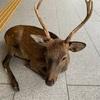 【鹿】鹿マニア必見!オススメの鹿5選!2019年保存版【Deer】