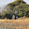 鳥ヶ池(兵庫県南あわじ)
