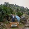 【大石林山】やんばる森林コース・6万本のソテツ群落・巨大ガジュマル・大自然トレッキング
