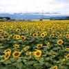 【悲報】明日から梅雨明けで暑い夏が来る