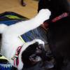 今日の黒猫モモ&白黒猫ナナの動画ー648