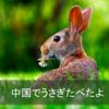 中国で兎(ウサギ)料理を食べたよ。そのお味は??
