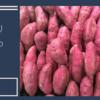 【さつま芋好きには堪らない!】長坂養蜂場の『しっとりはちみつ蜜芋』