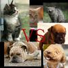 『犬派 VS 猫派』 で意見対立!