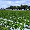 雪 ✕ 菜の花 ✕ 305=超レア写真