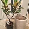 中古物件に引越した観葉植物