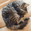 雑誌デビュー?猫情報誌「ゲットにゃび」発売決定により猫モデル募集中!