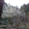 春、てんこ盛り