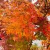 嵐山へ紅葉を見に行こう!!